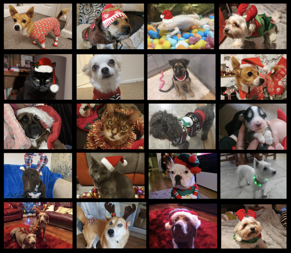 Sensée's Best Dressed Christmas Pets